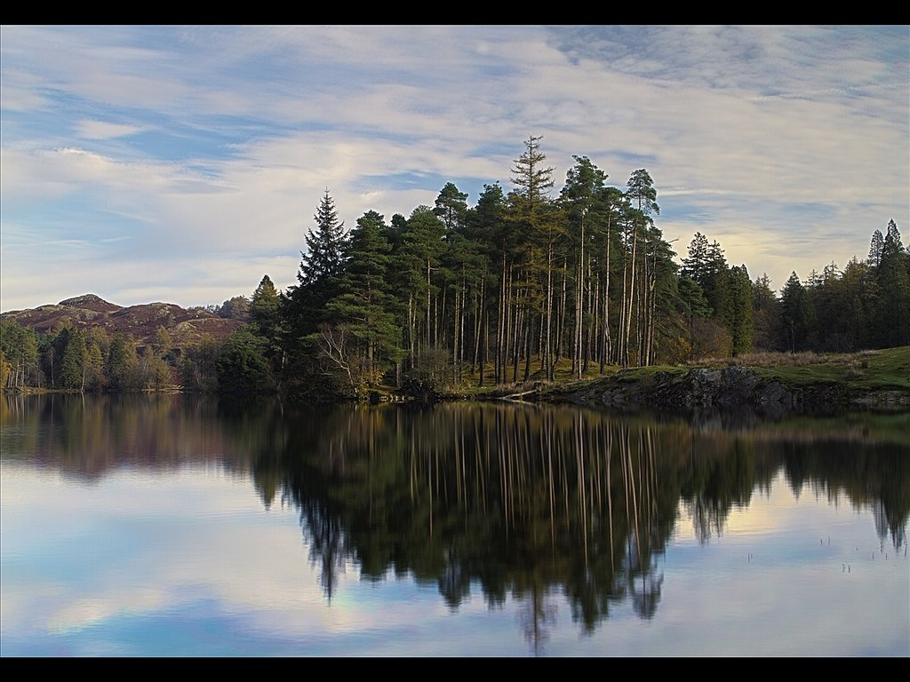 Tarn Hows Trees (c) John Metcalfe [Commended]