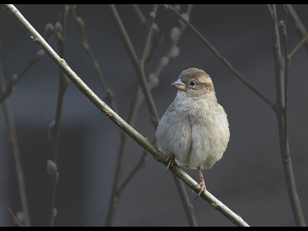 Young Finch (c) John Metcalfe [Commended]