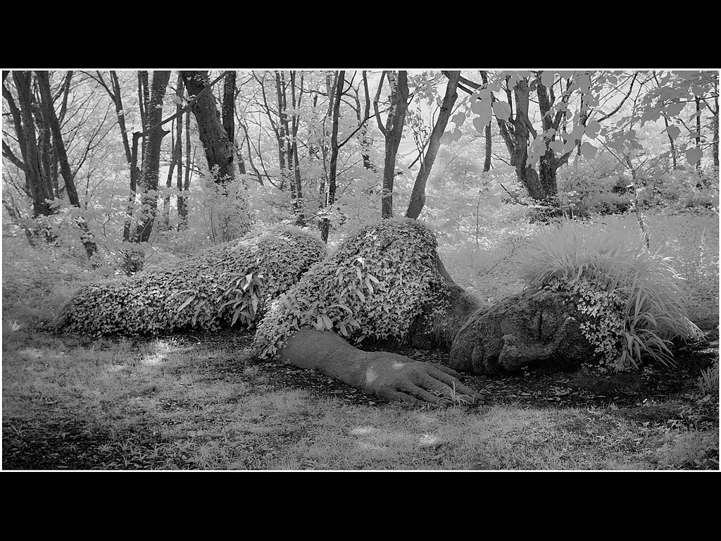 Nature Sleeps (c) Mike Atkinson [Commended]