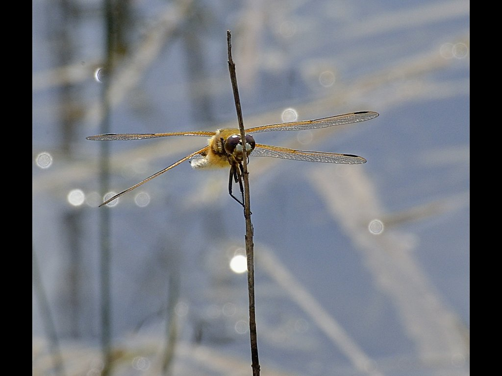 Dragonfly (c) Ruth Wood [Commended]