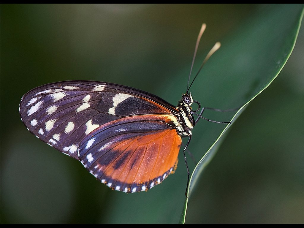 Butterfly on a leaf (c) Kirsty Railton [Commended]