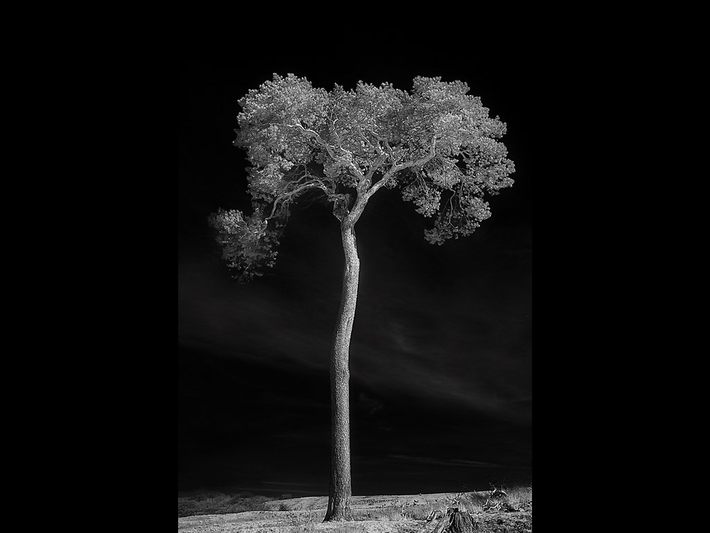 Lone Tree (c) Kirsty Railton [Highly Commended]