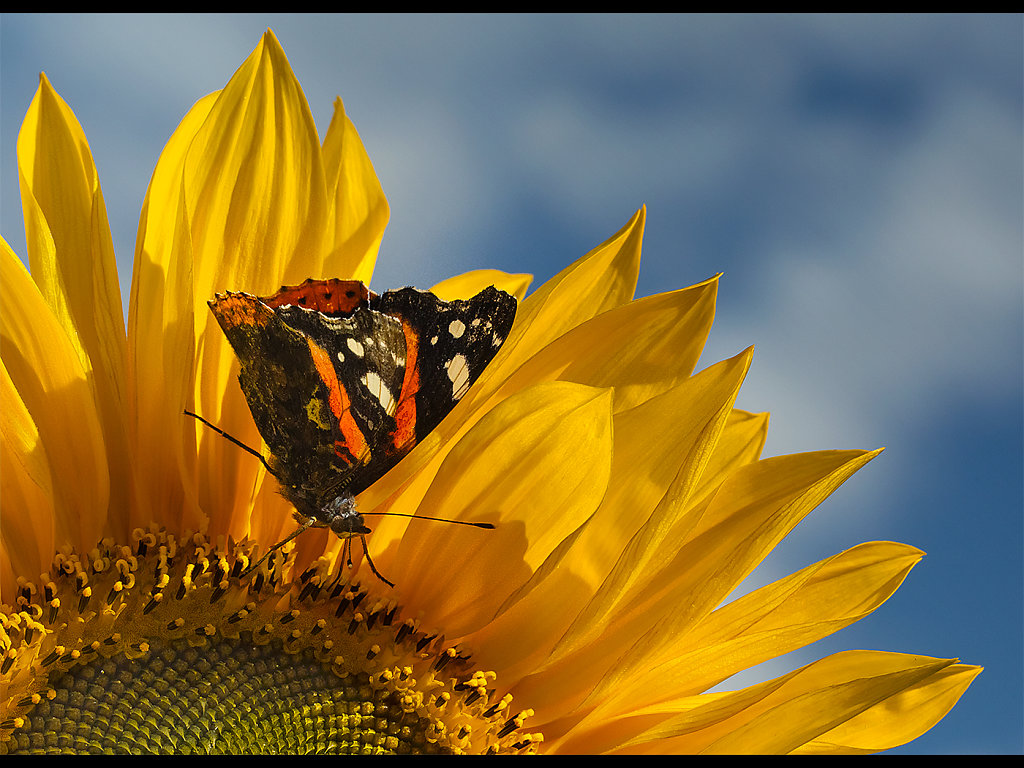 Butterfly in the Sun (c) Alan Phillips [Highly Commended]
