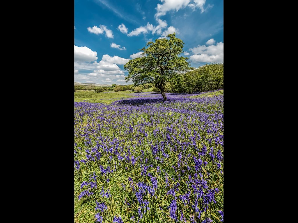 Oxenber Wood (c) Allan Hartley [Commended]