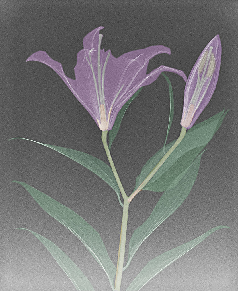 'X-rayed flower' Copyright (C) Keith Taylor 2019