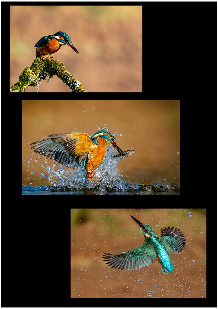 'Kingfisher diving for the prize' Copyright (C) Ruth Lochrie 2020