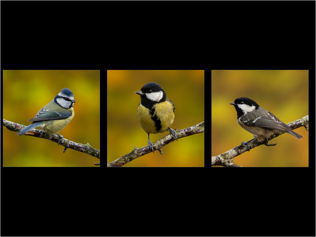 'Garden Tits' Copyright (C) Mike Atkinson 2020