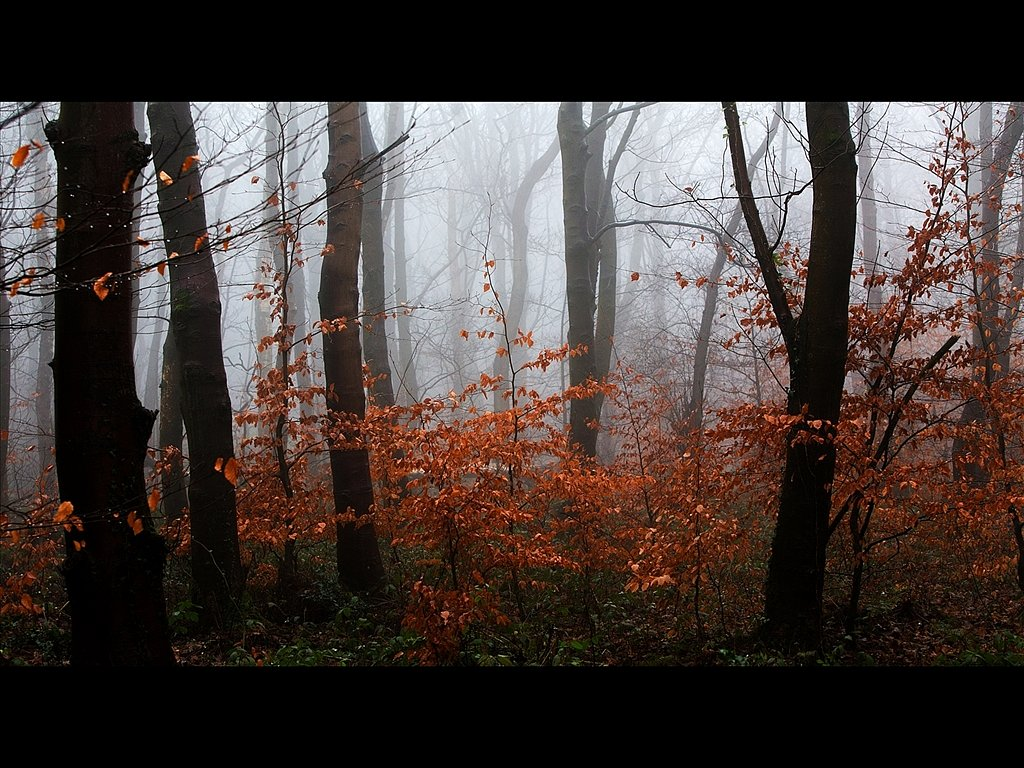 Woodland Mist (c) Mike Atkinson [Highly Commended]
