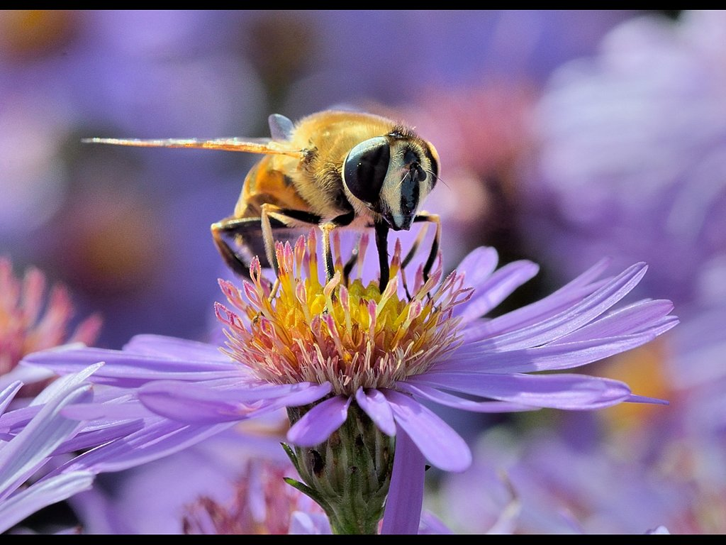 Bee (c) Ruth Wood [Highly Commended]