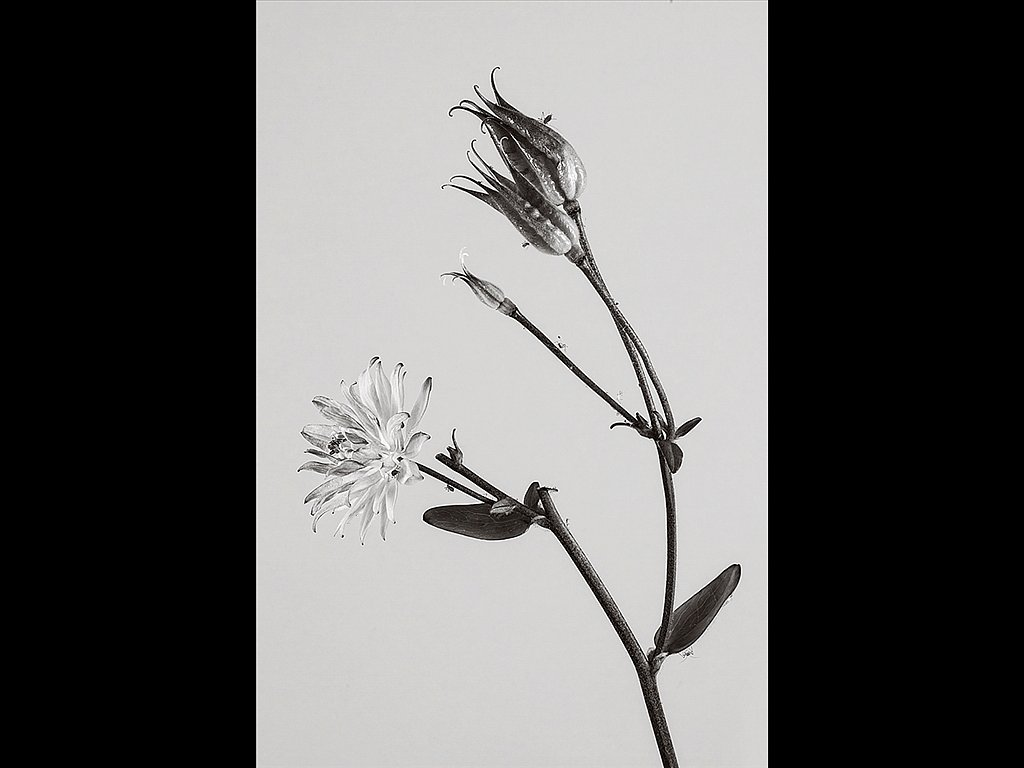 Flower, Seed Heads and Aphids (c) Alan Phillips [Commended]