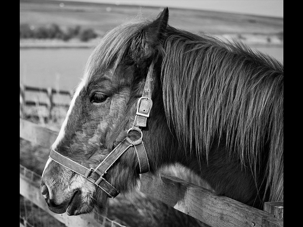 Mr Ed (c) Vince Spratling [Highly Commended]